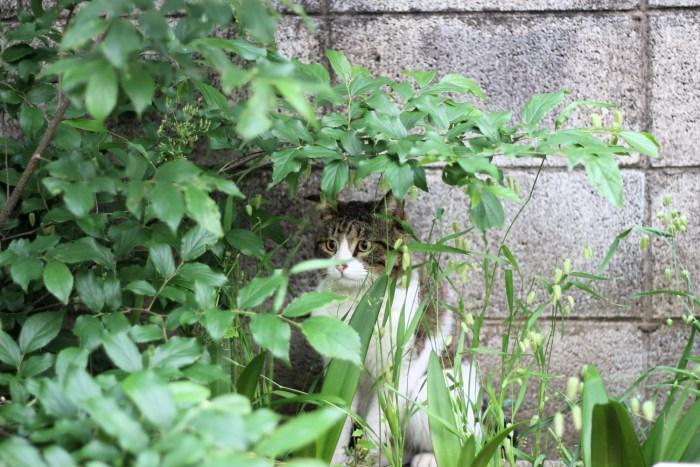 Tu veux voir ma collection de chats errants ? (Vol. 3)