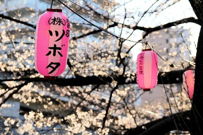 Vous reprendrez bien quelques cerisiers en fleurs, le long de la rivière Kanda à Tokyo ?