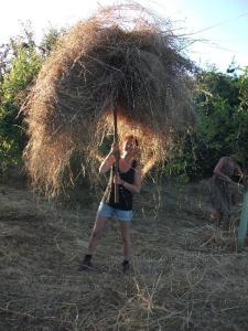 la hierba seca esta en camino al tractor