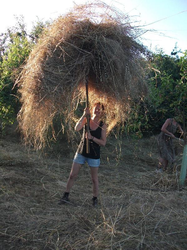 Das Heu wird auf die Gabel gehängt und zum Traktor gewuchtet