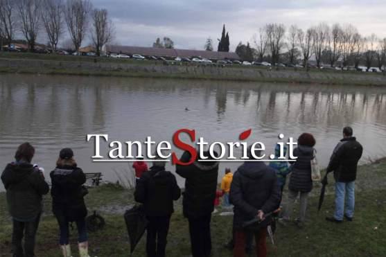 La persone sulla sponda dell'Arno che fotografano il delfino