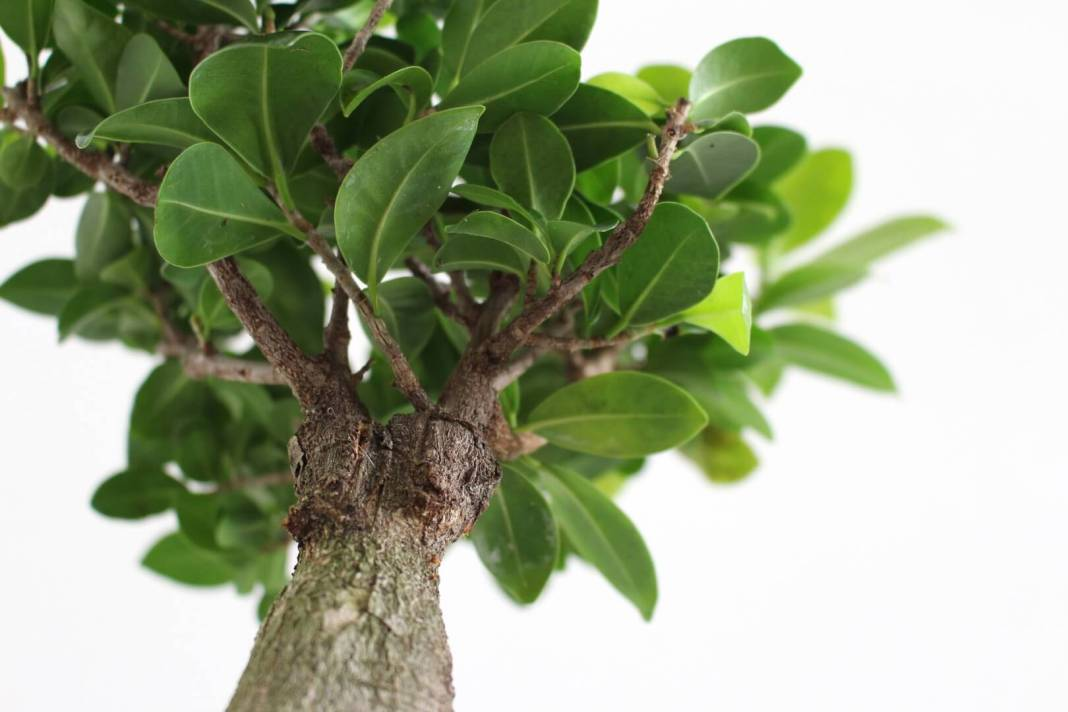 planten die tegen een stootje kunnen
