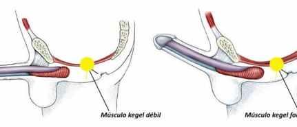 La activación de Yoni Chakra tiene que ver con el fortalecimiento de los músculos denominados Kegel