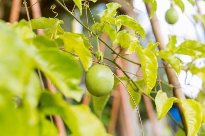 p_fruit