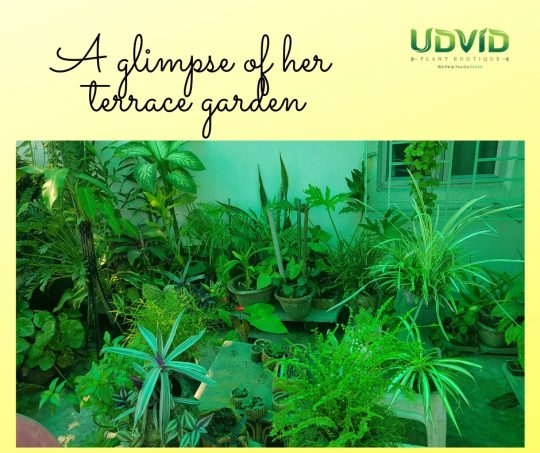 A splash of green in her terrace garden in Kolkata