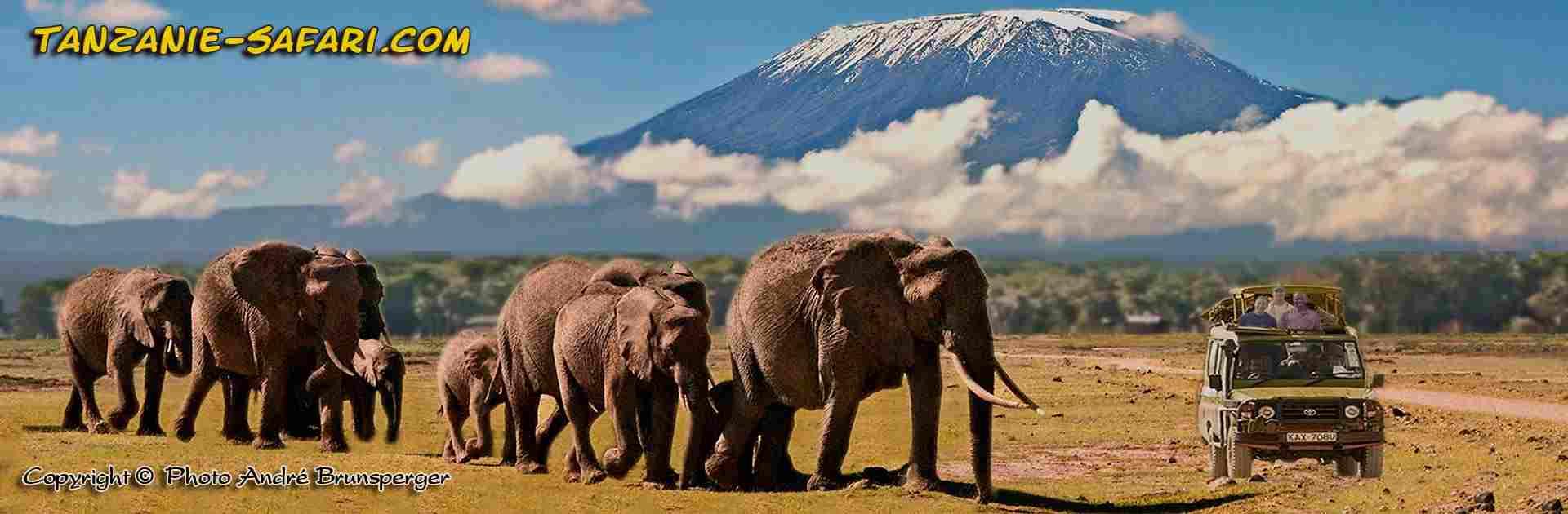 Voyage Tanzanie. Eléphants devant le mont Kilimandjaro le soir Tanzanie