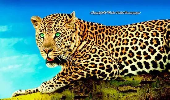 Safari tanzanie voyage Zanzibar.. Les guépards en famille Serengeti Tanzanie