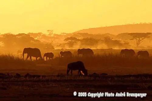 arnaques et quiproquos aux Safaris en tanzanie