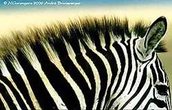 N'Gorongoro Safari en tanzanie