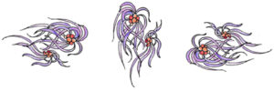 img squid