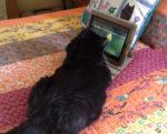 image cat- Maggie