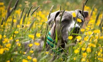 Kräuter für Hunde
