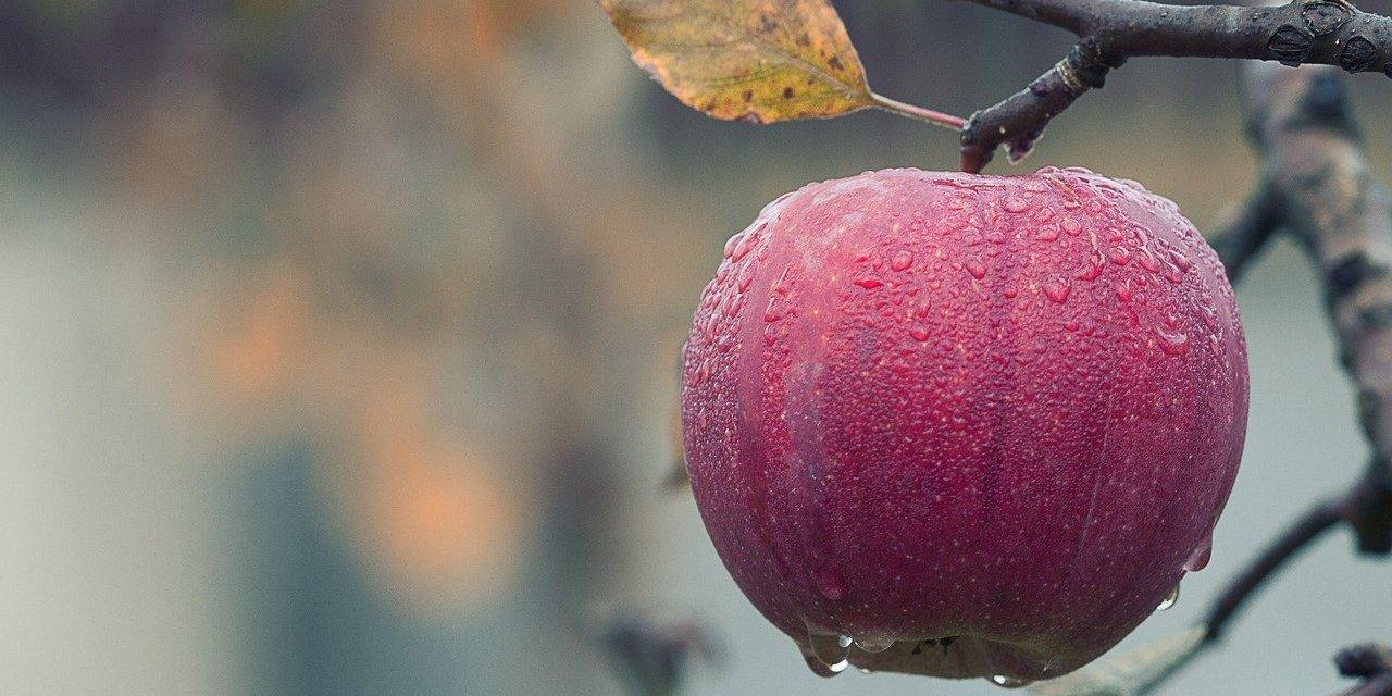 Pflanzenmagie: Der Apfel