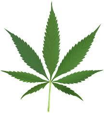 weedleaf1