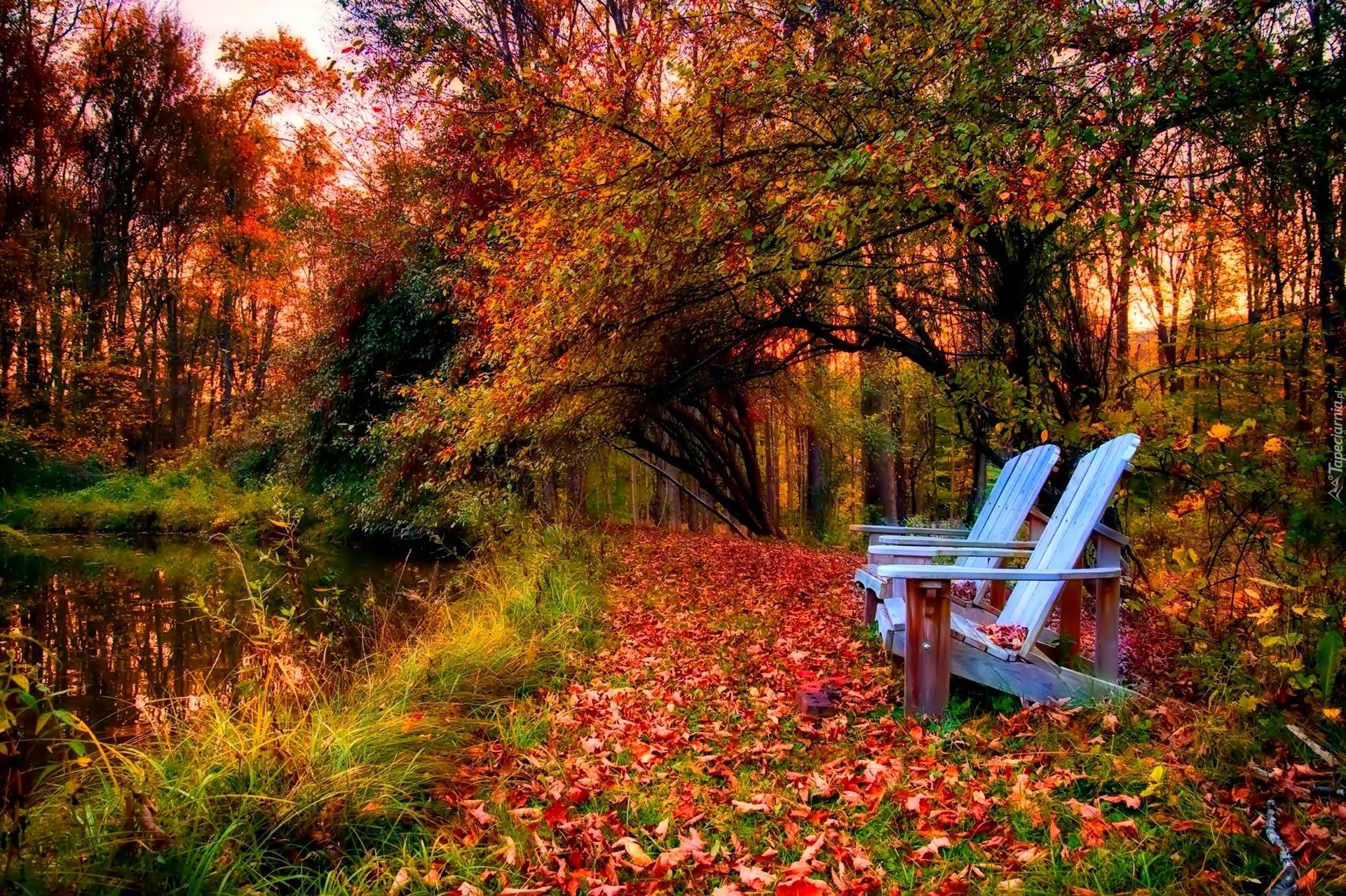 Tahquamenon Falls Michigan Winter Wallpaper Jesień Liście Park