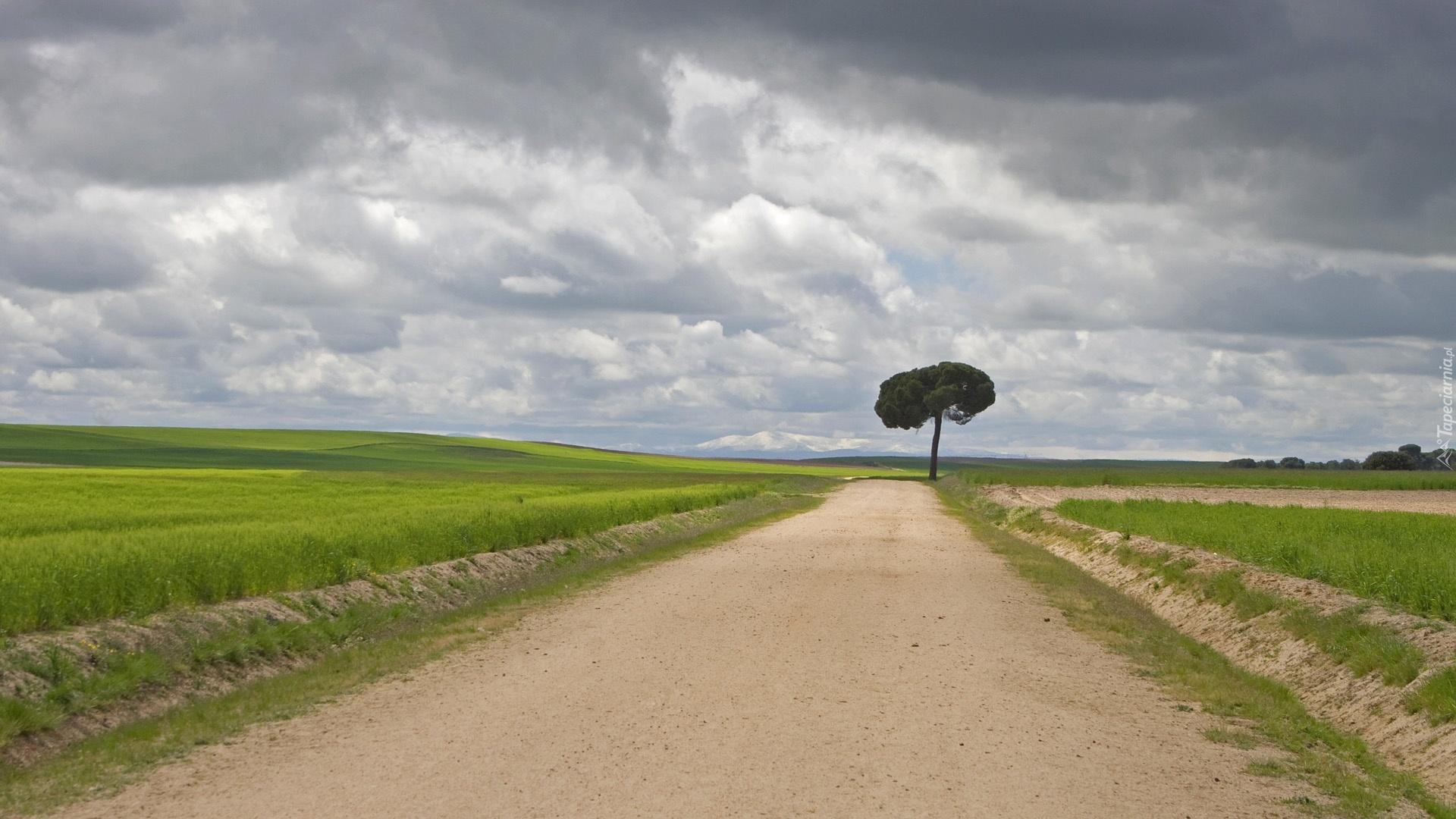 Hd Birthday Wallpapers 1080p Droga Pole Chmury Drzewo