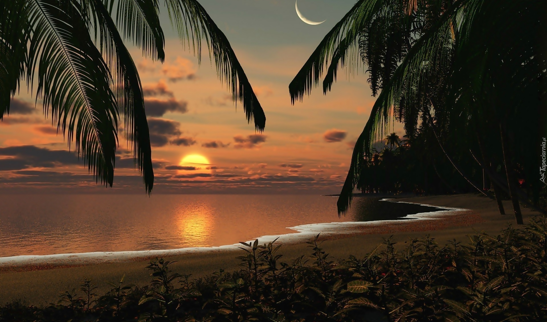 Good Night 3d Moving Wallpaper Zach 243 D Słońca Palmy Księżyc