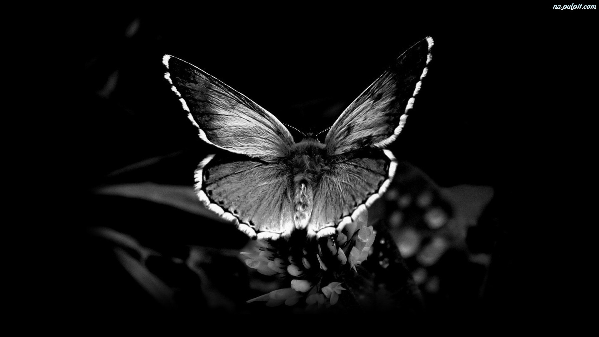 Black And White Flower Colored Wallpaper And Screensavers