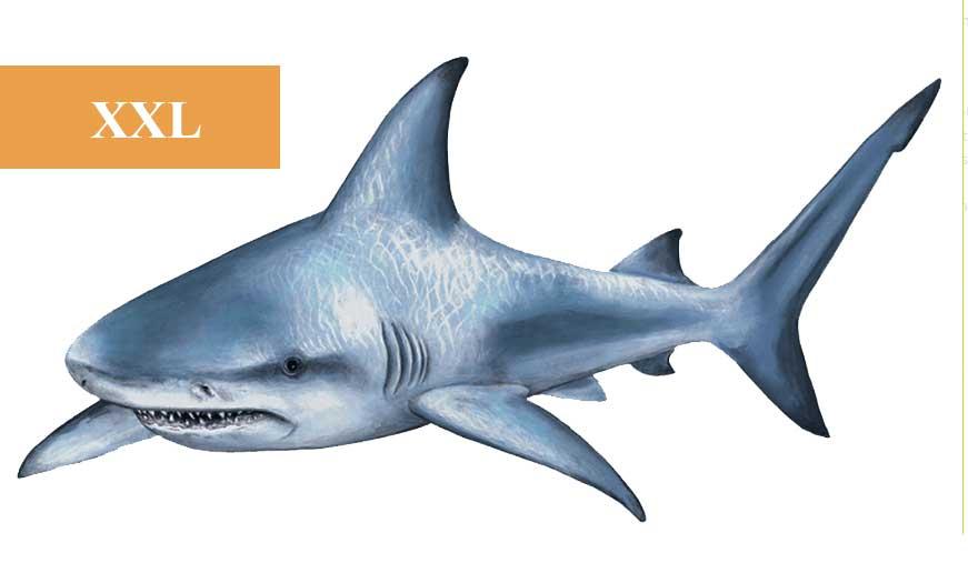 Wandsticker Unterwasser Hai  tapetenwelt