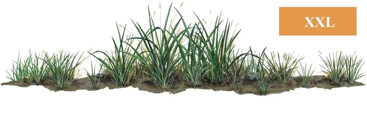 Wandsticker Dschungel Pflanze Gras  tapetenwelt