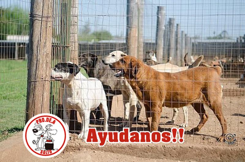 Protectora de Animales Salto - PRODEA