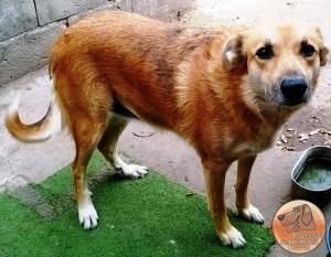 "<a href=""https://www.facebook.com/protectoradeanimalesdolores/"" target=""_blank""><img src=""http://www.tapitasoportunidades.com/blog/wp-content/uploads/2017/12/social-facebook-box-blue-icon.png"" alt=""Facebook"">Protectora de Animales Dolores - Soriano</a>"
