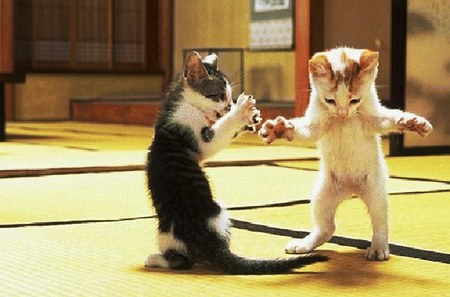 apple v google cat fight, your shoe's untied, sucker.