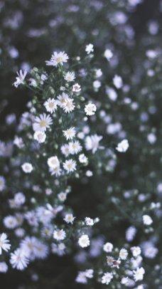 Hd Flower Wallpaper For Iphone 7 Adsleaf Com