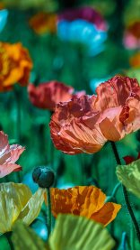 Orange and Green HD Flower Wallpapers for iPhone 7