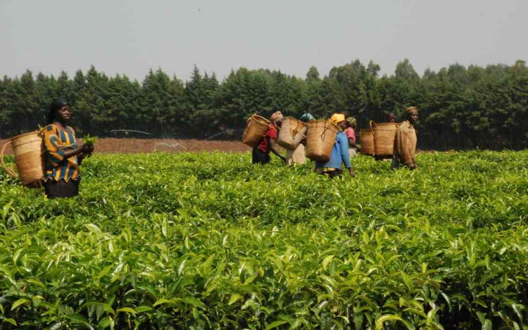 Taraba to Benefit from N13 Billion Pest Control Fund