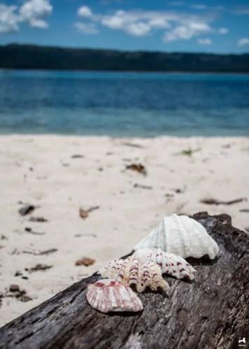 Alibijaban beach shells