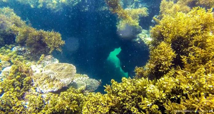 Underwater view in Jomalig beach