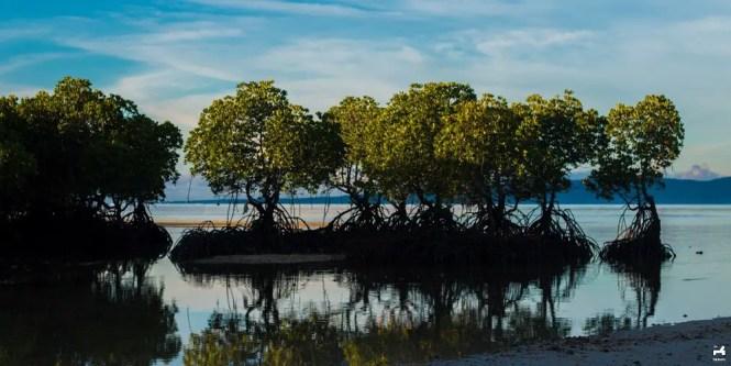 Allibijaban Island mangrove