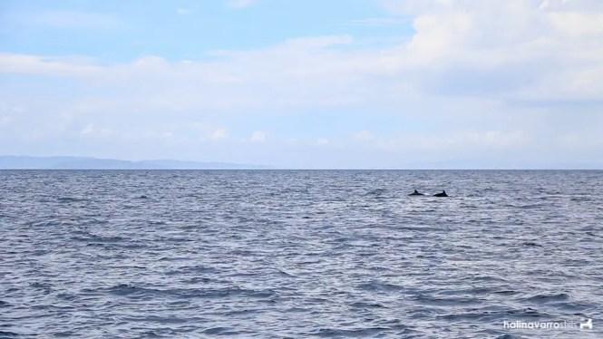 Dolphins in Biliran