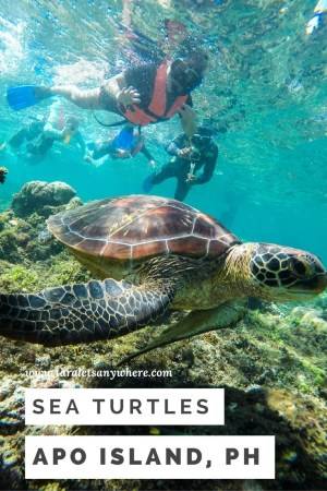 Swimming with turtles in Apo Island, Philippines | dive spots in the Philippines | ethical animal tourism
