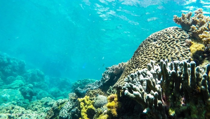 Snorkeling in Apo Island, Negros Oriental