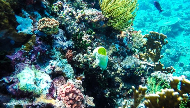Snorkeling site in Apo Island, Negros Oriental