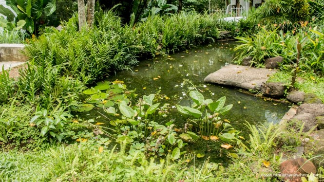 Pinto Art Museum pond