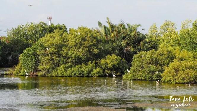 Bird sanctuary in Zamboanga City