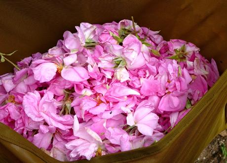 petale-trandafiri-ww