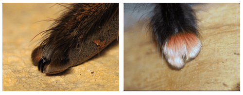 These Tarantulas Spide Paws Are So Cute They Will Make You
