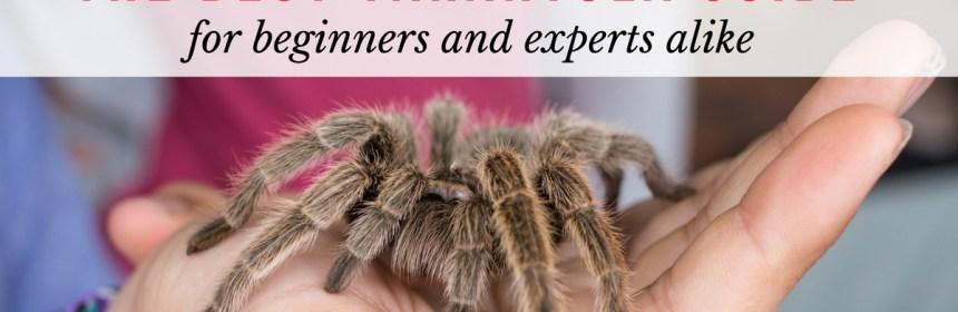 tarantula guide
