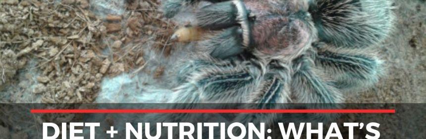 Tarantula Diet + Nutrition: What's Best For Your Tarantula?