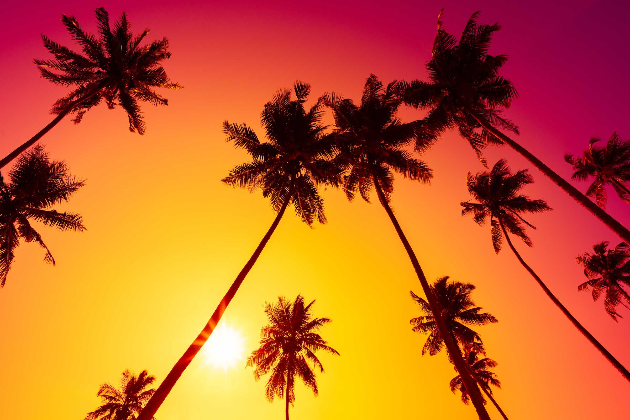 Vibrant Sunset with Palm Trees