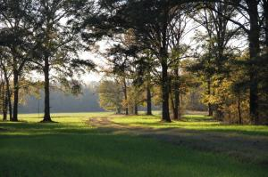 Trail to an Open Field