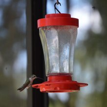 Hummingbirds at the Lodge
