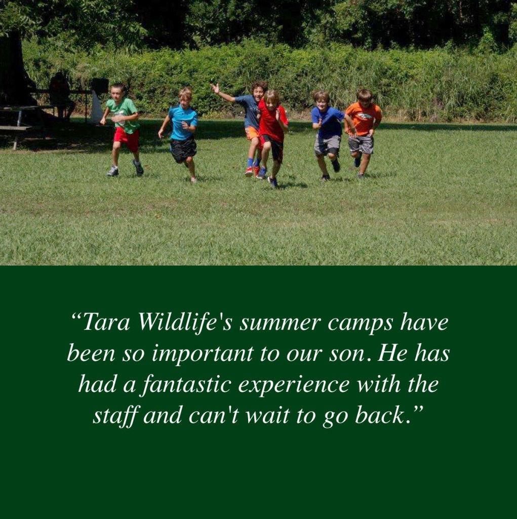 camp-quote1