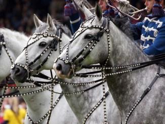 Equestria Tarbes 2017. ouverture mardi à 18h
