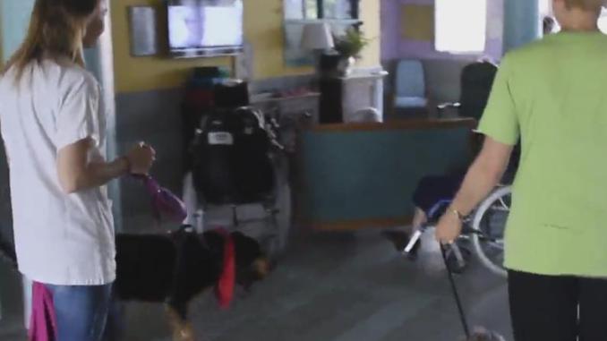 Tarbes, des soignantes vont à l'Ayguerote avec leur chien