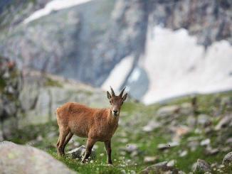 Pyrénées. le Parc national demande aux randonneurs la plus grande attention
